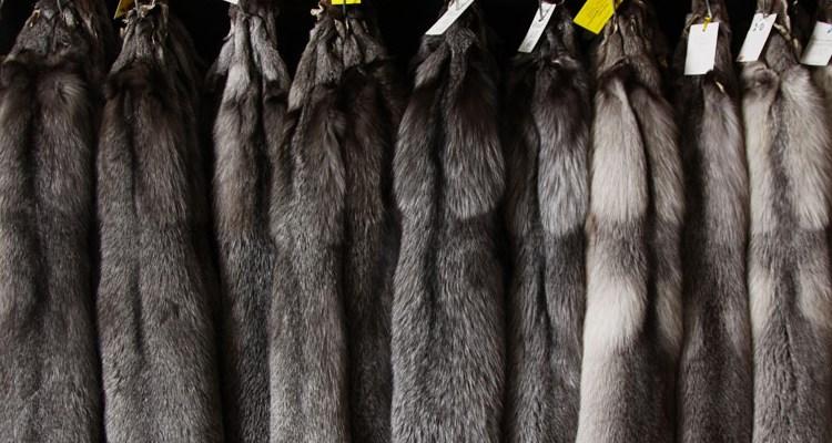 Способы обработки и выделки меха - от пушного аукциона до меховой фабрики