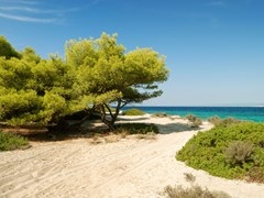 sand beach with pines and bush