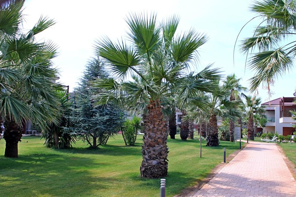 Almyros Beach Resort & Spa - 9